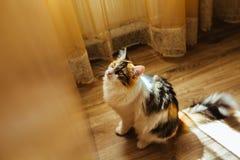 Le chat est prêt pour sauter Image de tonalité chaude Concept d'animal familier de mode de vie Image libre de droits