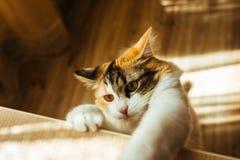 Le chat est prêt pour sauter Image de tonalité chaude Concept d'animal familier de mode de vie Photos libres de droits