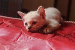 Le chat est regardé amorcé Photos libres de droits