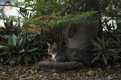 Le chat est repos sous l'arbre Photo stock