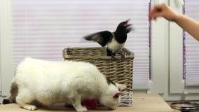 Le chat et l'oiseau mangent ensemble banque de vidéos