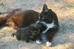 Le chat et le chaton de mère se trouve sur le soleil Photo stock