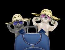 Le chat et le chien partent en voyage pour voyager avec la valise Image stock