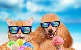 Le chat et le chien rouges mange la crème glacée  Photo libre de droits