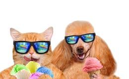 Le chat et le chien rouges mange la crème glacée  Image libre de droits