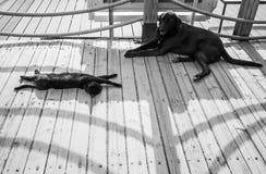 Le chat et le chien sans abri noirs se reposent dans l'ombre Images stock