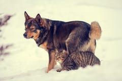Le chat et le chien sont les meilleurs amis Photo stock
