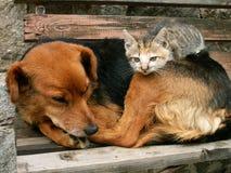 Le chat et le crabot sont des amis qui est le bossage Image libre de droits