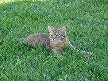 Le chat explore le paysage photographie stock