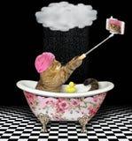 Le chat fait un selfie dans un bain 2 de couleur photos stock