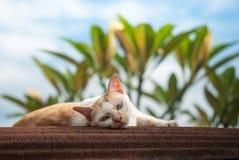 Le chat fixent sur le toit rouillé Photos libres de droits