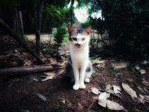 Le chat frais dans la jungle photos stock