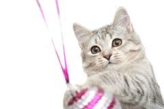 Le chat gris Photo stock