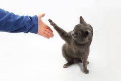 Le chat gris donne une patte avec les griffes tendues dans la paume du photos stock