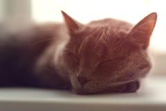 Le chat gris dort sur la fenêtre Images stock
