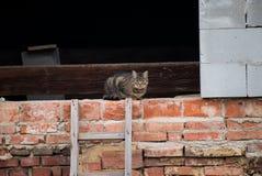 Le chat gris est dans une lucarne des briques image libre de droits