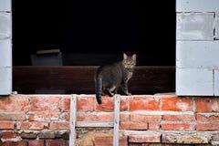Le chat gris est dans une lucarne des briques photo libre de droits