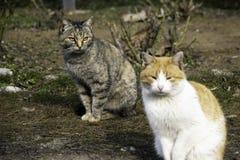 Le chat gris et le chat de gingembre se reposent sur la pelouse photographie stock libre de droits