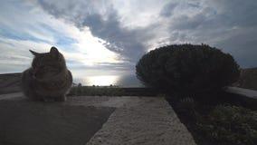Le chat gris se repose sur le bord de mer clips vidéos