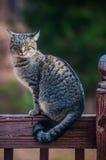 Le chat gris sur une frontière de sécurité Image stock