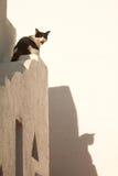 Le chat indiquent le miaow photographie stock
