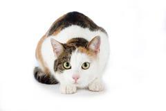 le chat a isolé repéré image stock
