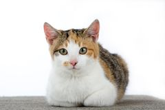 le chat a isolé repéré images libres de droits