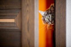 Le chat jette un coup d'oeil dans la porte image libre de droits
