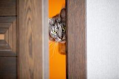 Le chat jette un coup d'oeil dans la porte photographie stock libre de droits