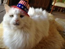 Le chat le plus mignon jamais, chat dans un chapeau, minou dans un tophat Image libre de droits