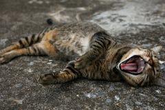 Le chat local brun noir se couche sur le plancher à la maison Photos libres de droits