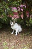 Le chat maigre se repose à la terre photos libres de droits