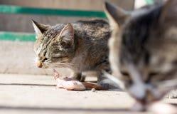 Le chat mange de la viande sur la nature Image stock
