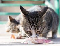 Le chat mange de la viande sur la nature Photo stock