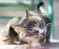 Le chat mange de la viande sur la nature Photo libre de droits