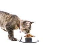 Le chat mange des aliments pour chats secs Photographie stock libre de droits