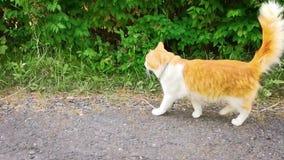 Le chat marche le long du chemin et rencontre le chien banque de vidéos