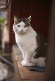 Le chat masculin de Tom se reposent sur le porche de maison de campagne photographie stock libre de droits
