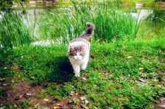 Le chat mauvais insidieux sort de l'herbe Images libres de droits