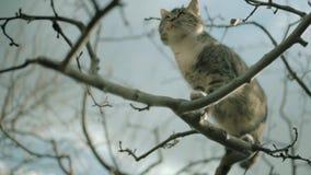 Le chat mignon équilibre sur une branche d'arbre clips vidéos