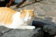 Le chat mignon avec les yeux fermés prennent un petit somme paresseux sur des pierres de noir de Lanzarote photos stock