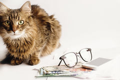 Le chat mignon se reposant sur la table avec des verres téléphonent et argent, fonctionnant Images libres de droits