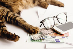 Le chat mignon se reposant sur la table avec des verres téléphonent et tenant la patte dessus Photographie stock libre de droits