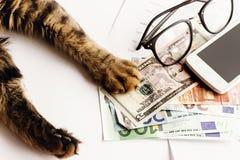 Le chat mignon se reposant sur la table avec des verres téléphonent et tenant la patte dessus Image stock
