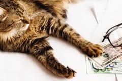 Le chat mignon se reposant sur la table avec des verres téléphonent et tenant la patte dessus Photographie stock