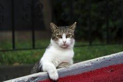 Le chat mignon se repose à extérieur photos libres de droits