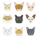 Le chat multiplie la collection de vecteur : Ensemble de 9 races différentes de chat dans le style de bande dessinée illustration libre de droits