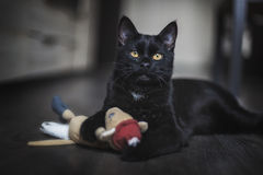 Le chat noir Photo stock