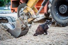 Le chat noir, affamé, sans abri lave sous le seau d'une excavatrice photos libres de droits
