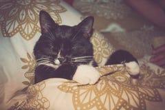 Le chat noir et blanc d'animal familier à la maison dort dans le lit à côté de la personne Photographie stock